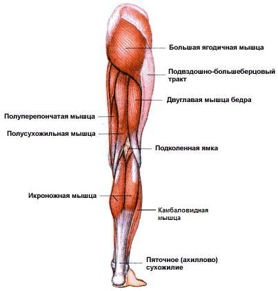 Главные мышцы и суставы импульсно-волновая терапия суставов