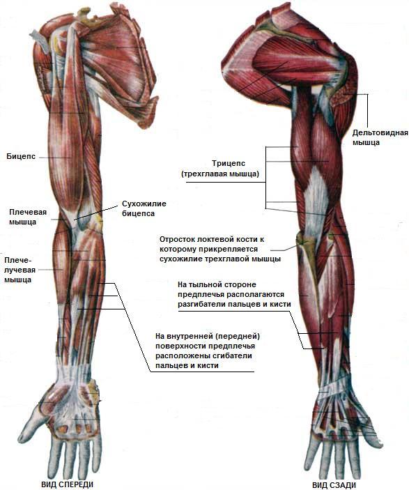 Упражнения для ног в зале фото 10