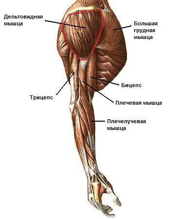Болят суставы и мышцы рук что делать протезирование коленного сустава украина